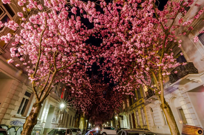 10-Spectacular-Places-To-Visit-During-Spring-Time-1b