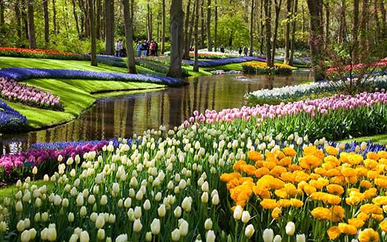 46672_fullimage_flowers%20along%20the%20water%20in%20the%20keukenhof
