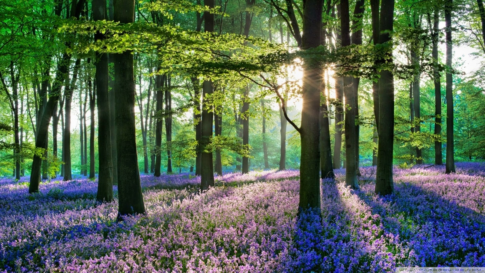 Blue Forest Halle, Belgium 1